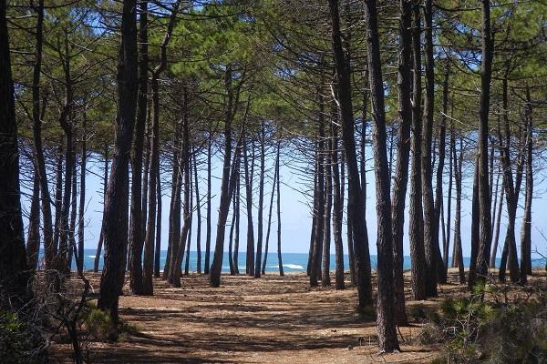 Landes-la forêt